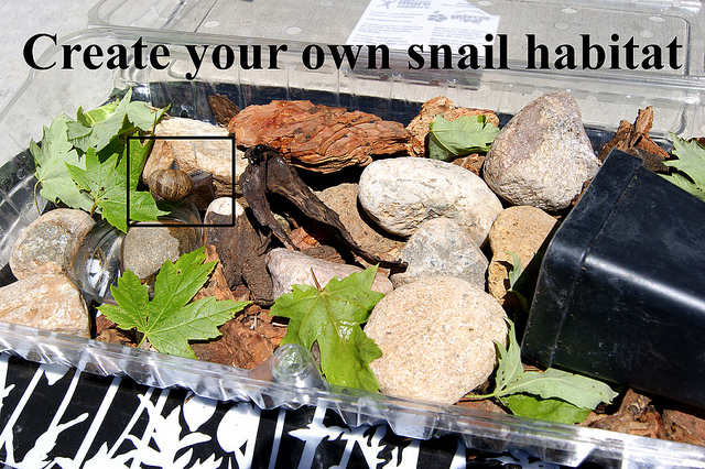 Create Your Own Gardening Calendar Mississippi State University Extension Service How To Create Your Own Snail Habitat Make