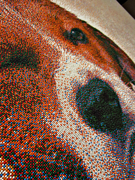 candy_art_dog_closeup1.jpg