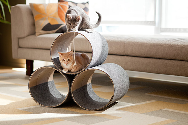 lowescreativeideas_cat_condo