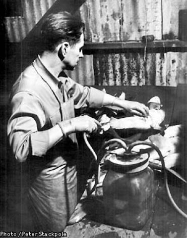 Ed Ricketts in his lab in 1945 - dissecting a shark. Photo by Peter Stackpole (Yes, most amazingly, Eric Stackpole's grandfather). SU Archive #158.