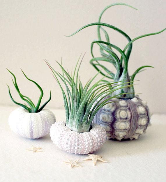 sea-urchin-planters-1