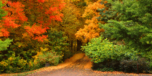 Wallpaper Images Of Fall Trees Lined Lake Fall Color Guide Minneapolis Northwest