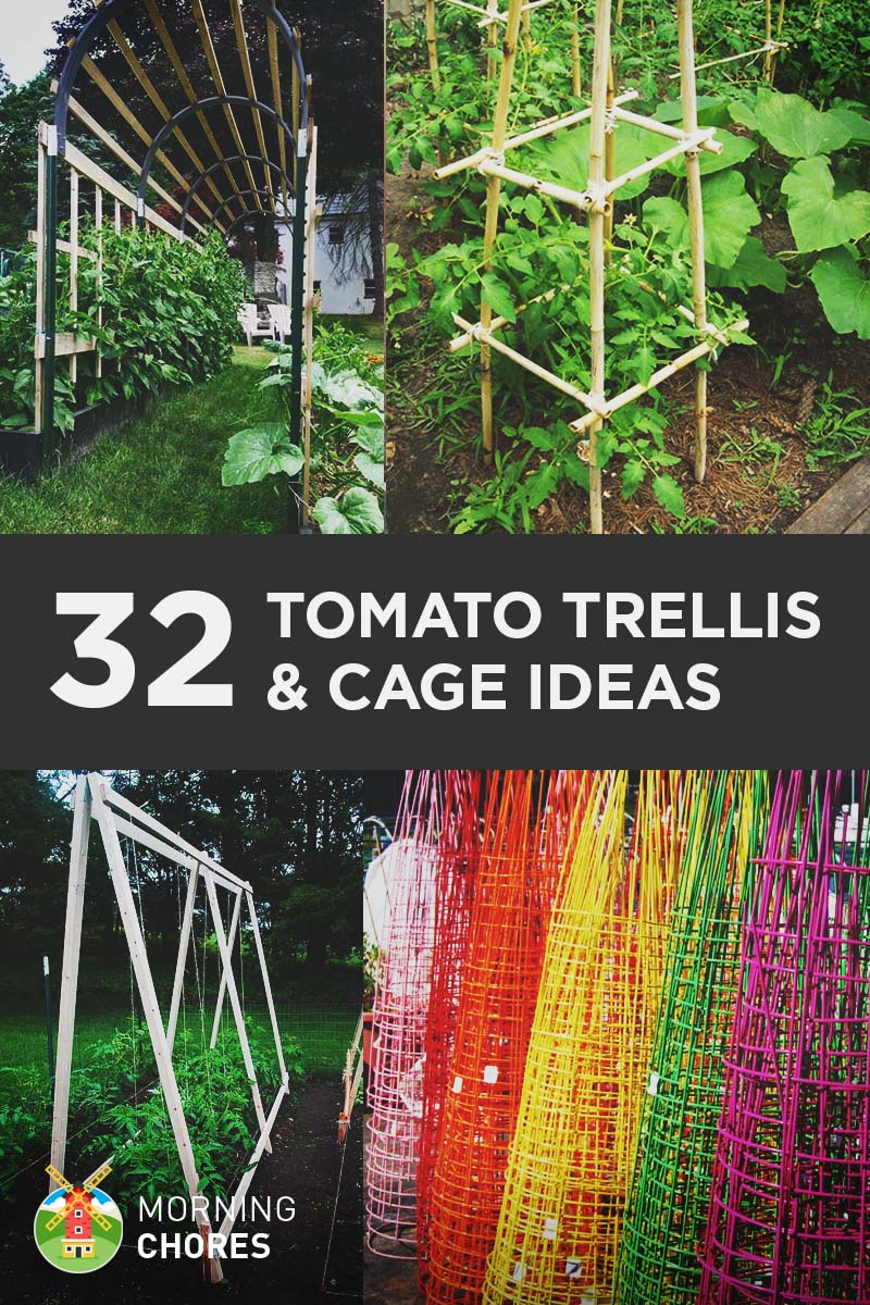 Plush Healthy Tomatoes Having A Huge Garden Because Diy Tomato Trellis Cage Ideas Do You Have A Smaller Yard That Has Limited Growing Space Your If You Just Like Idea houzz-02 How Far Apart To Plant Tomatoes