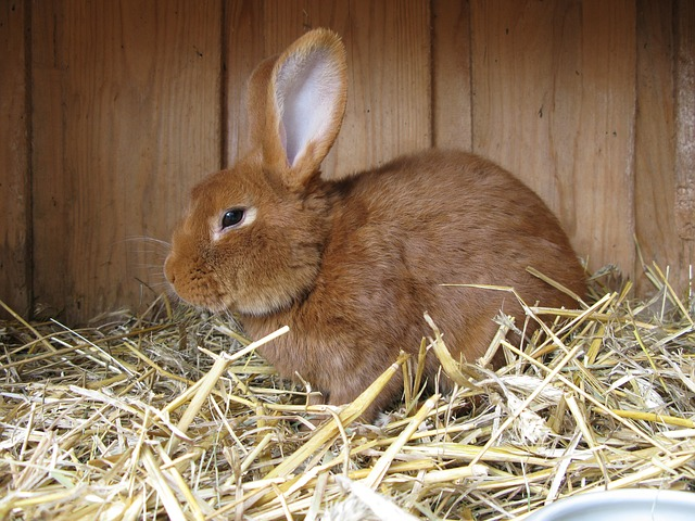 Raising  Breeding Rabbits for Meat the Ultimate Guide