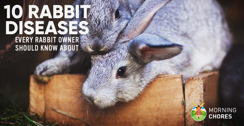 10 Common Rabbit Diseases, Illnesses,  Ailments (and How to Treat Them)