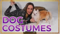 Best Dog Halloween Costumes - DIY Ideas