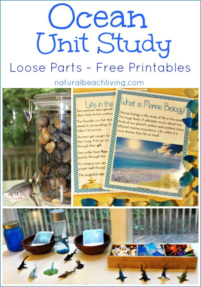 The Best Ocean Unit Study for Kids - Ocean Lesson Plans - Natural
