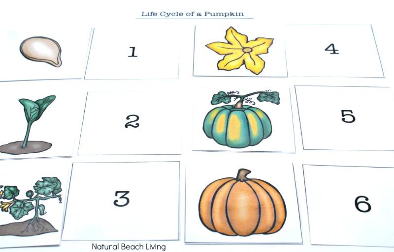 Pumpkin Activities for Kids - Pumpkin Theme Lesson Plan (STEM