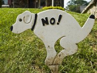 How to Stop Dogs from Using Your Lawn as a Bathroom - Networx