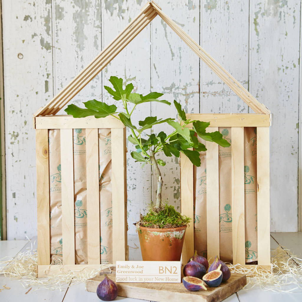 Personalised New Home Gifts Personalised Fig Tree New Home Gift