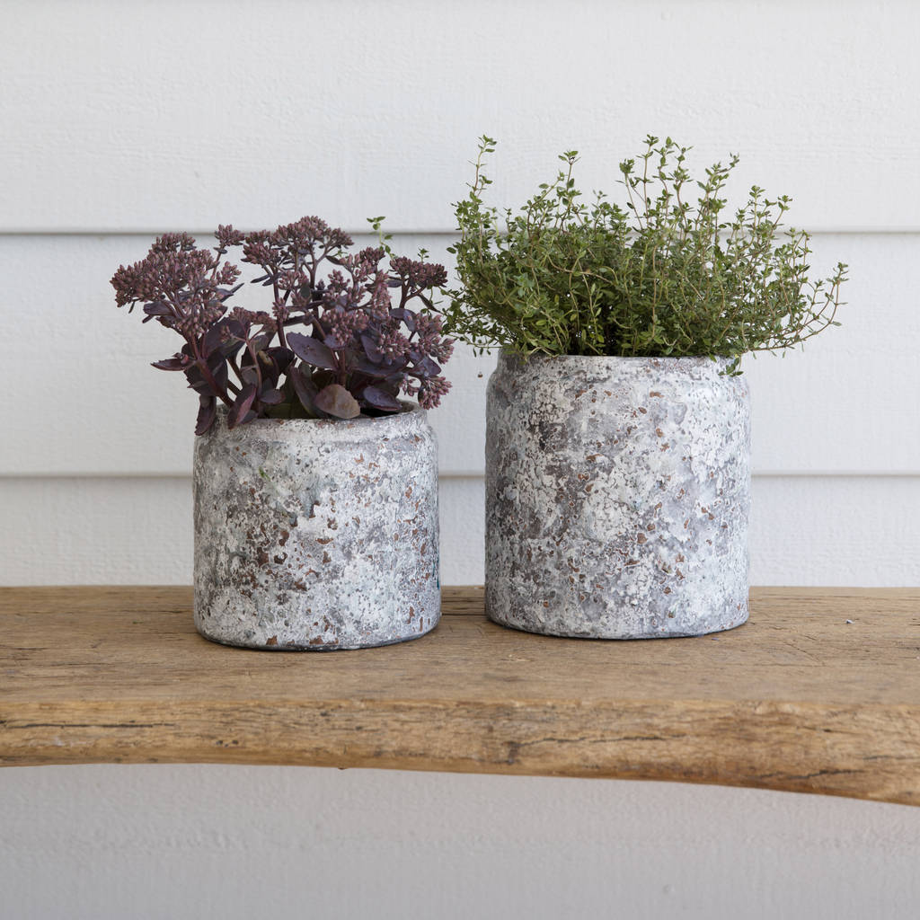 Ceramic Pots For Plants Indoor Ceramic Textured Plant Pot By All Things Brighton