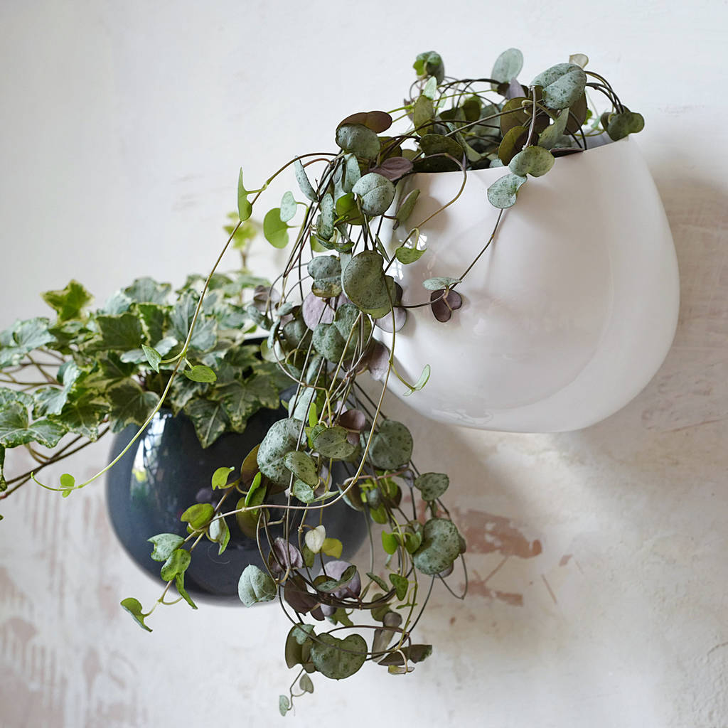 Wall Hanging Plants Ceramic Wall Hanging Plant Pot By Lilac Coast
