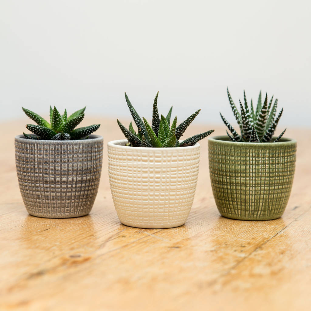Porcelain Planters Ceramic Trio Of Ceramic Planters With Succulents By Stupid Egg