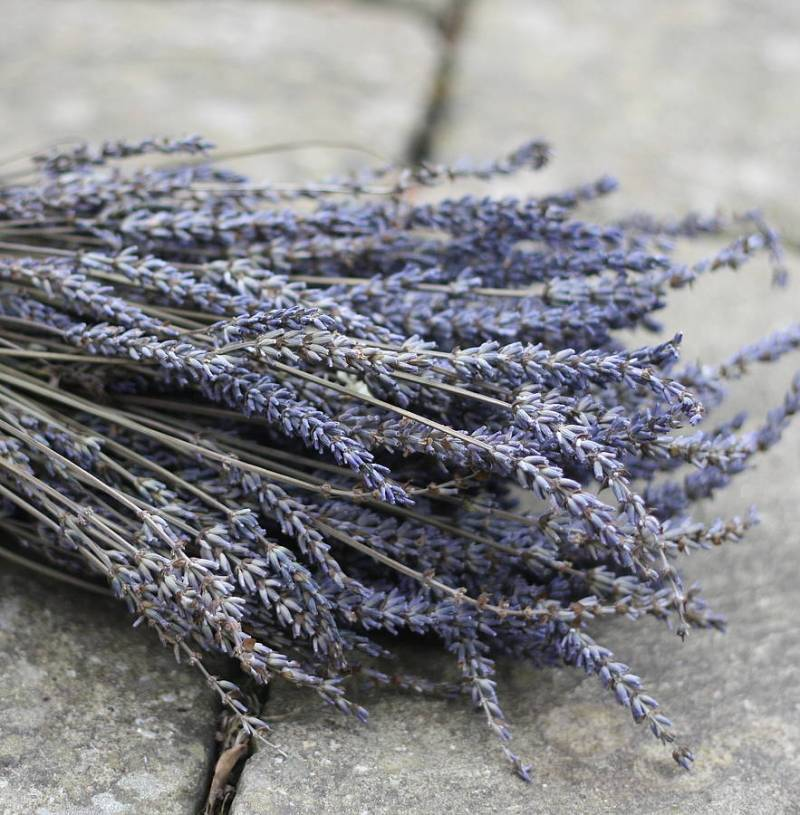 Large Of How To Dry Lavender