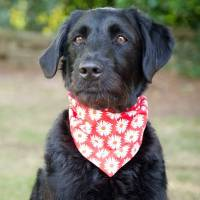 dog neckerchief red prints by redhound for dogs ...