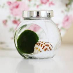 Small Of Marimo Moss Ball