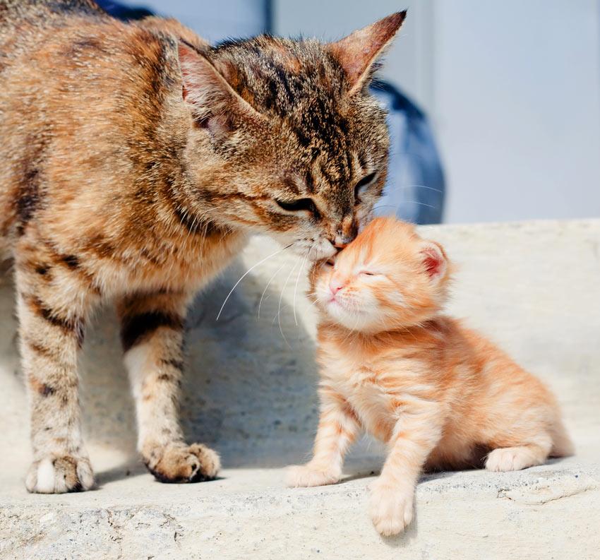Cute Little Puppies Wallpapers Should I Get A Kitten Or Adopt An Older Cat Choosing