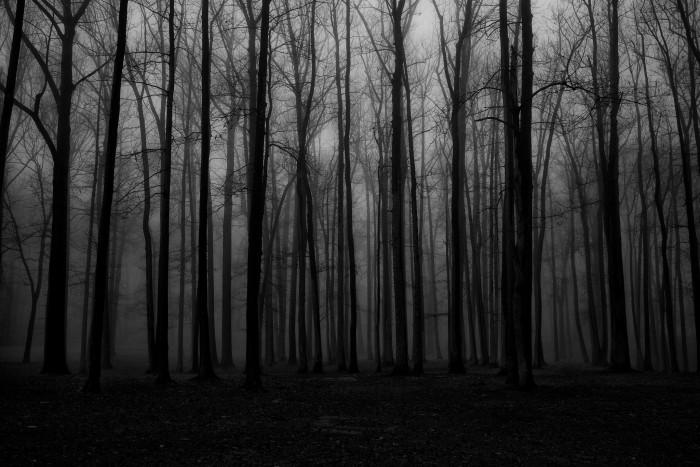 Fall Mist Wallpaper Eerie Landscapes In New Jersey