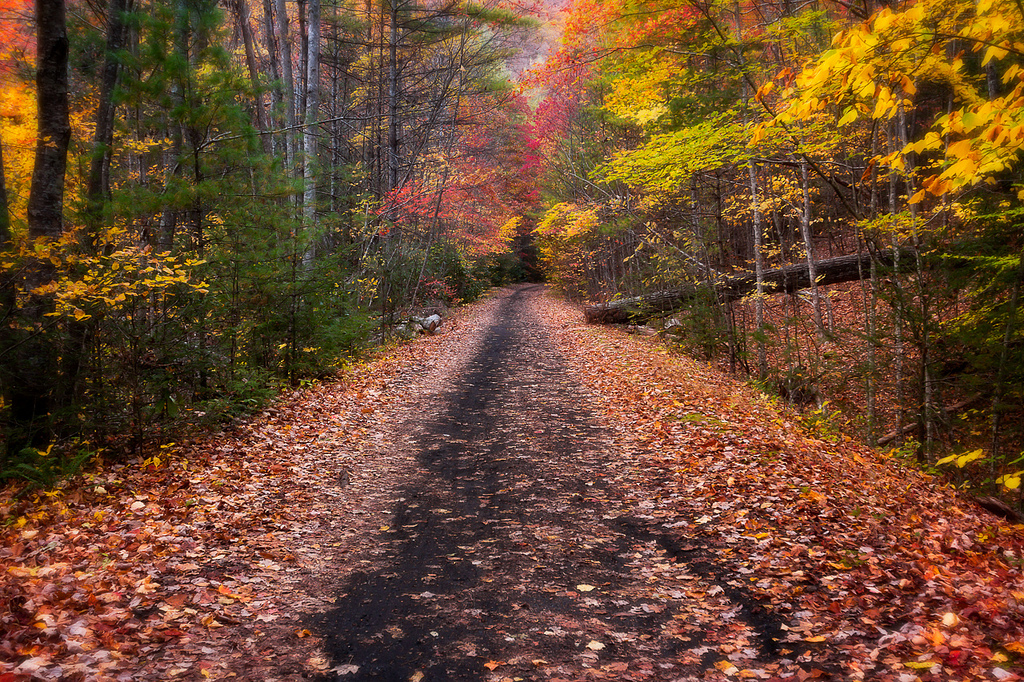 Colorado Fall Wallpaper 12 Trails In Virginia You Must Take If You Love The Outdoors