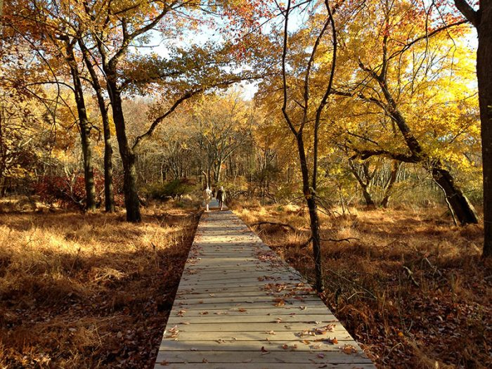 Fall Foliage Wallpaper Hiking Cheesequake State Park In New Jersey