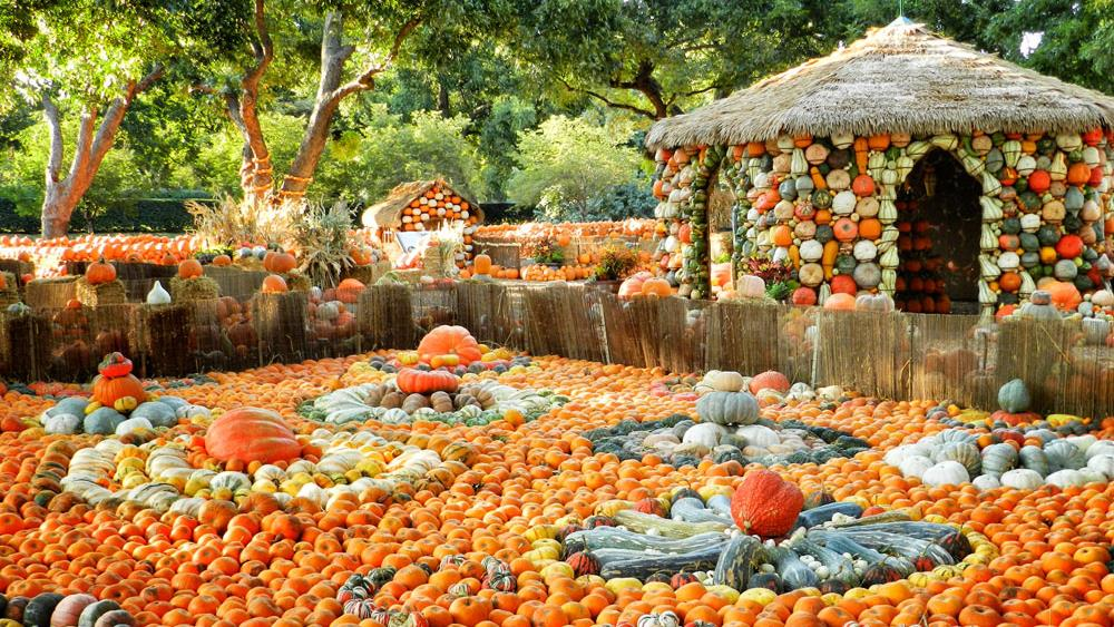 Wisteria Falls Wallpaper The 10 Best Pumpkin Patches In Texas In 2016