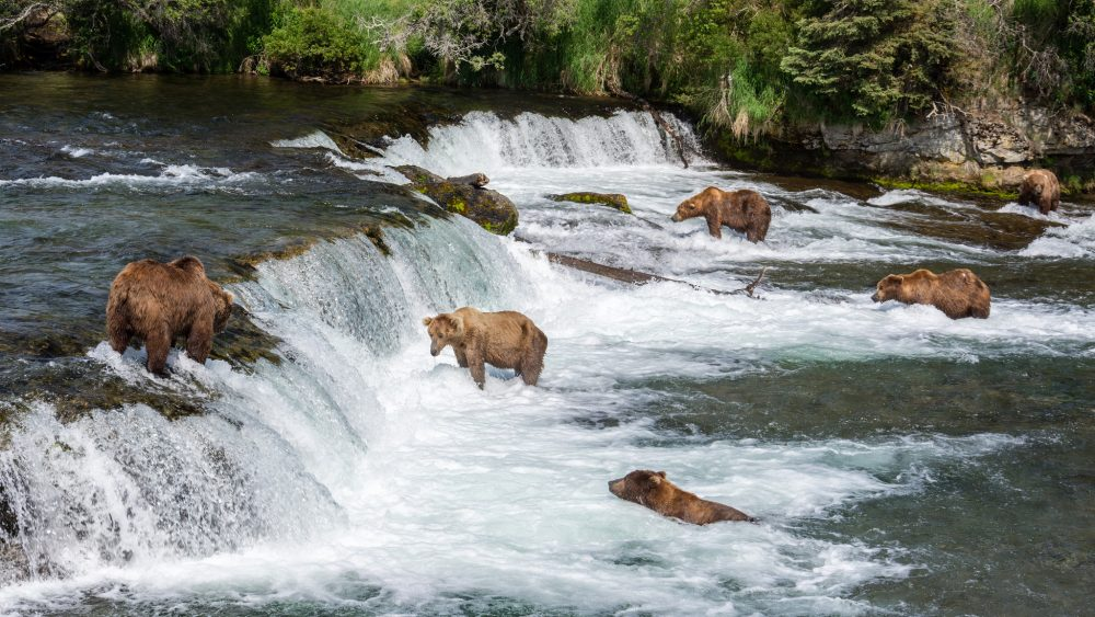 Portland Oregon Fall Had Wallpaper Here Are The 19 Best Places To View Wildlife In Alaska In 2017