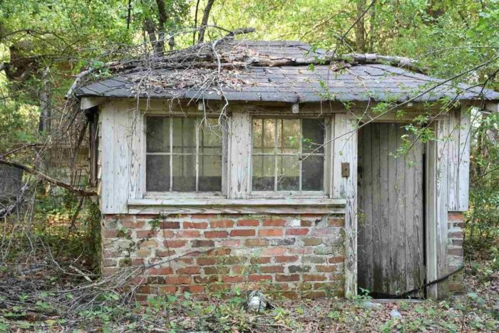 17 Staggering Photos Of Red Doe An Abandoned Plantation