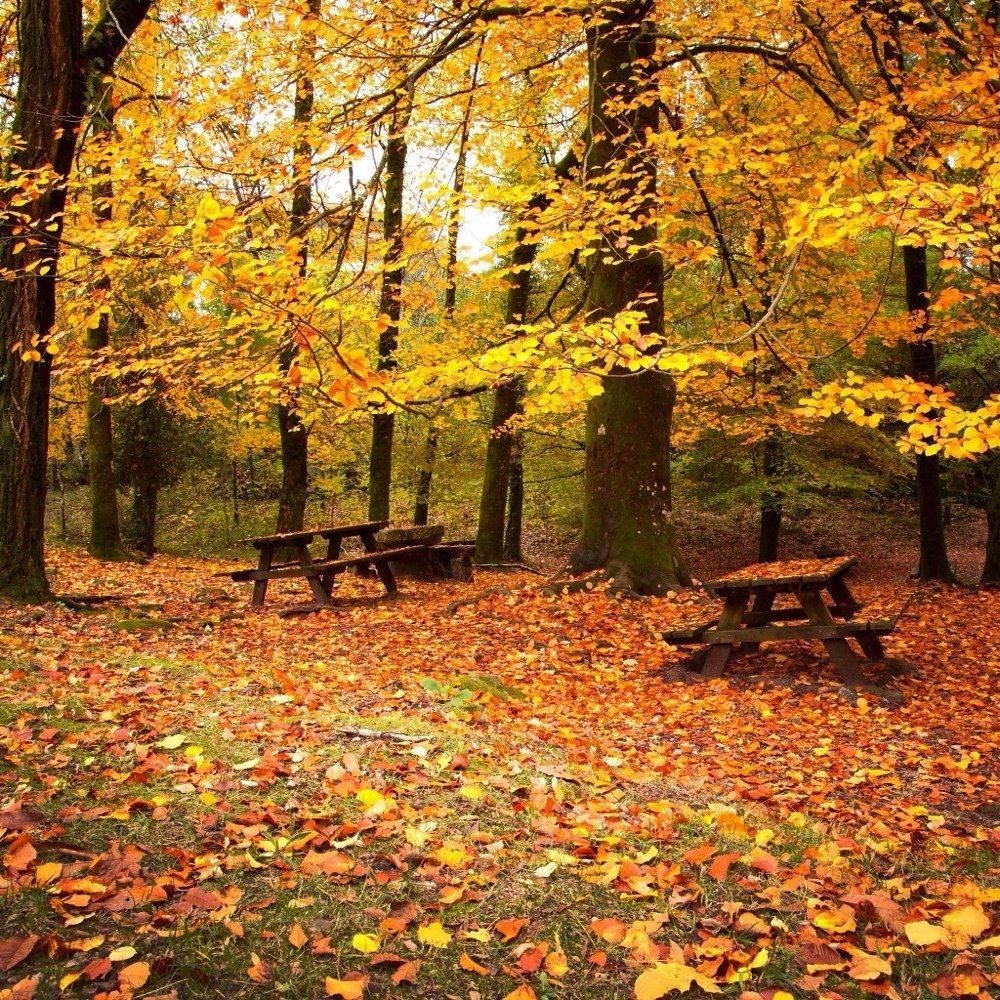 Mississippi State Wallpaper Iphone 9 Short And Sweet Fall Hikes In Kansas With A Spectacular