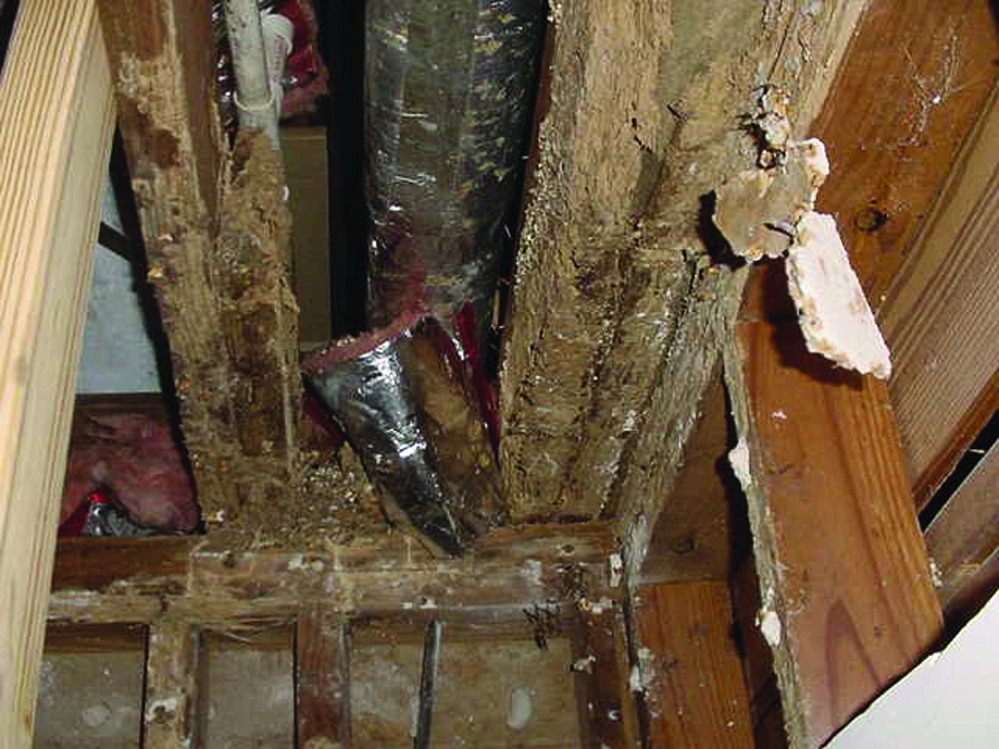 Termite Structural Damage - Heavy Damage from Termite Infestation