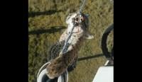 Shocking Photos: Bobcat Electrocuted After Climbing ...