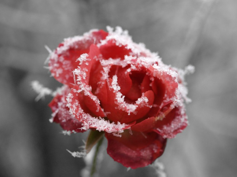 Falling Stars Live Wallpaper Frost Warning Tonight Tips On Protecting Your Plants