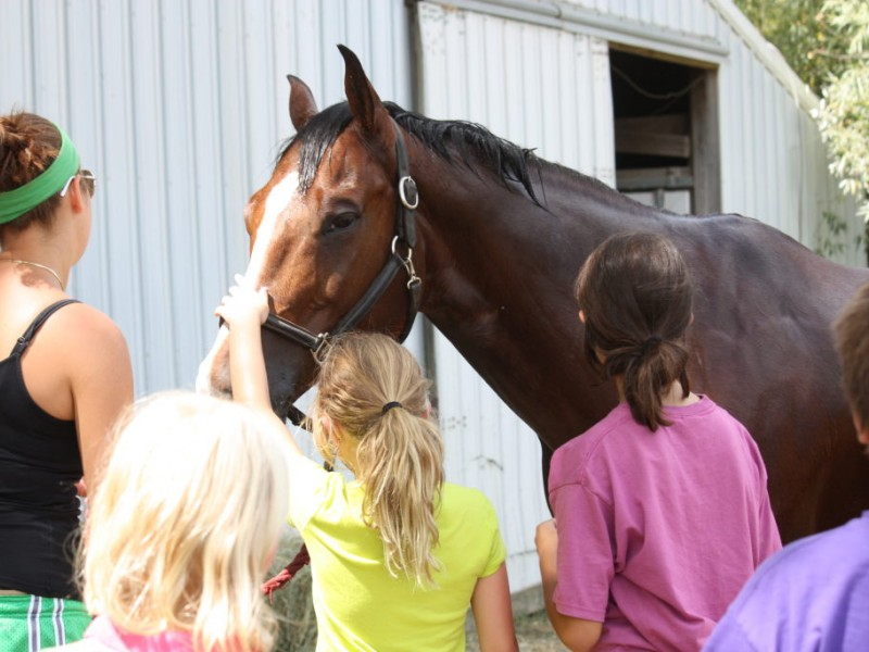 Travel Jobs Zurich Horsemanship Day Camp At Palatine Stables Palatine Il Patch