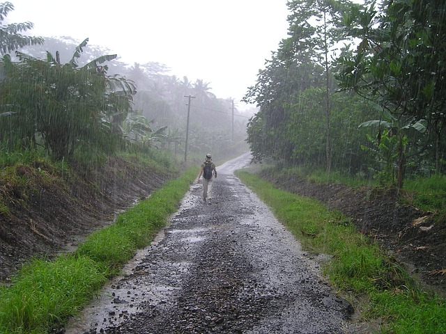 Exotic Animal Wallpaper Downpour Rainy Season Samoa 183 Free Photo On Pixabay