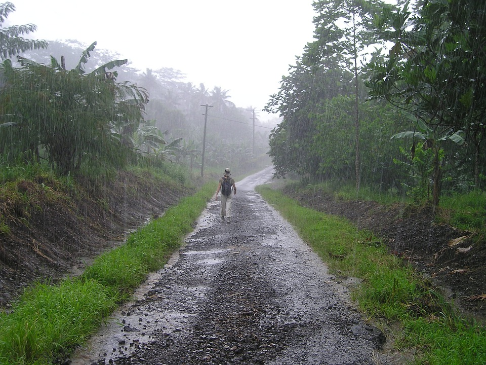 Summer Animal Wallpaper Downpour Rainy Season Samoa 183 Free Photo On Pixabay