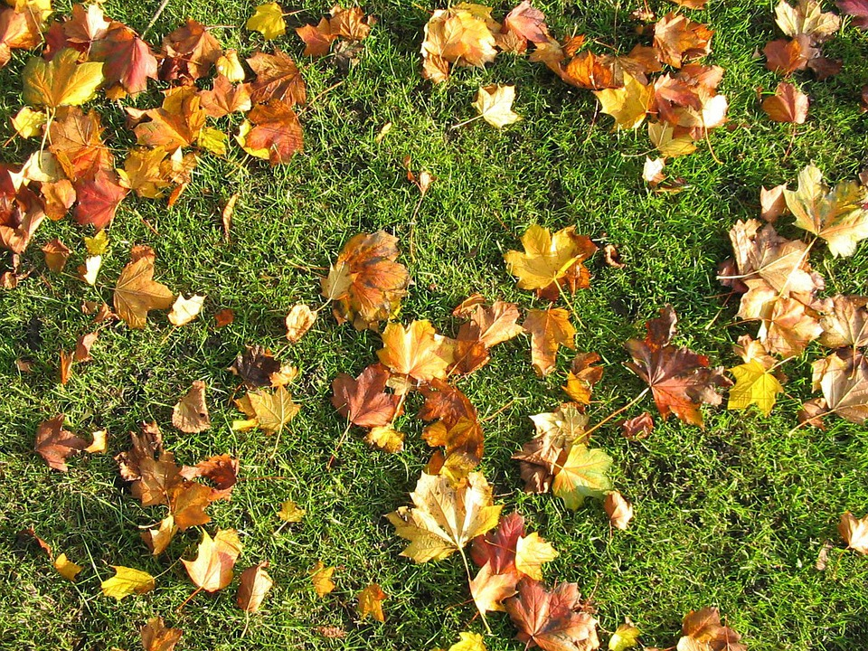 Fall In Love Leaf Wallpaper Brown Leaves Grass 183 Free Photo On Pixabay