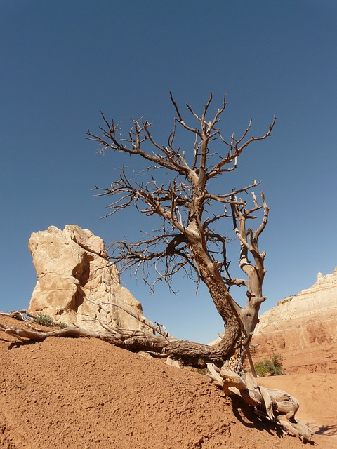 Free Computer Wallpaper Backgrounds For Fall Free Photo Tree Dry Drought Arid Stone Free Image