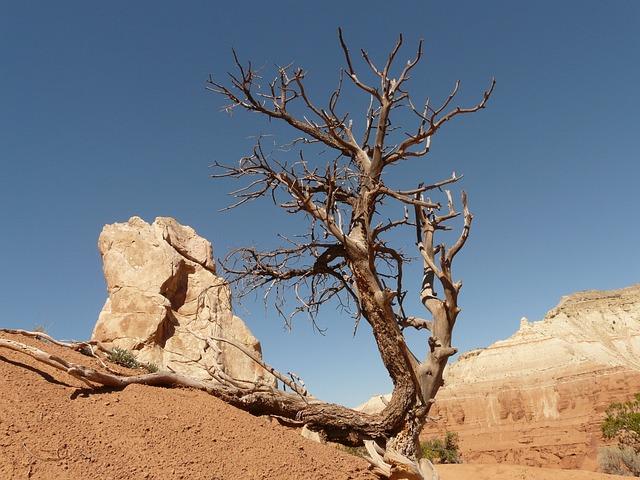 Hd Wallpaper Fall Leaf Change Free Photo Tree Dry Drought Arid Stone Free Image