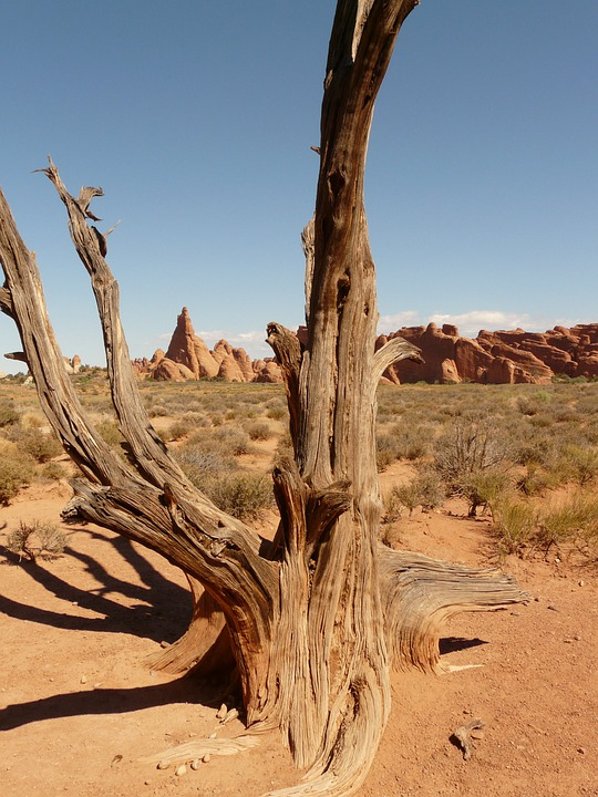 Download Hd Christmas Wallpapers Free Photo Tree Branch Wood Dry Desert Free Image