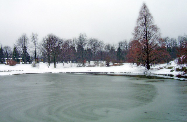 Water Animation Wallpaper Free Photo Frozen Pond Park Ice Winter Free Image