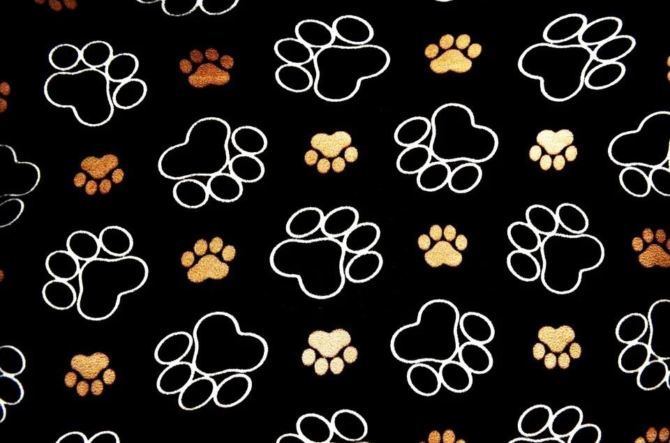 Cute Child Love Hd Wallpapers Dog Pawprint Tracks 183 Free Image On Pixabay