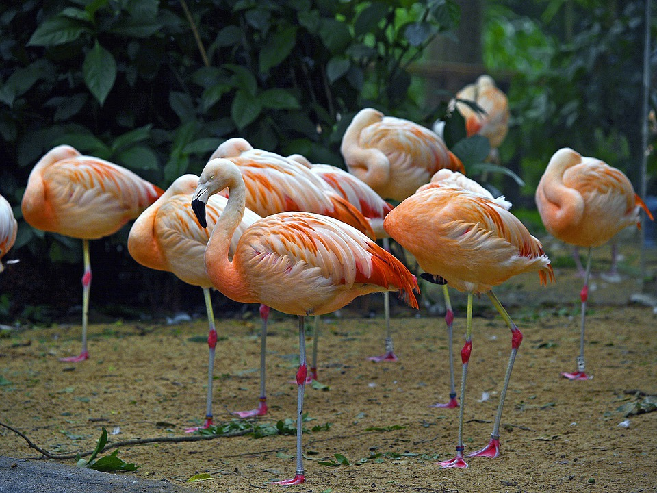 Jungle Wallpaper With Animals Brazil Flamingos Water Birds 183 Free Photo On Pixabay