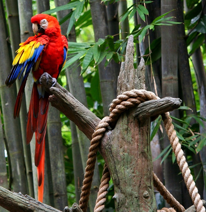 Rebel Girl Wallpaper Red Macaw Parrot Tropical Bird 183 Free Photo On Pixabay
