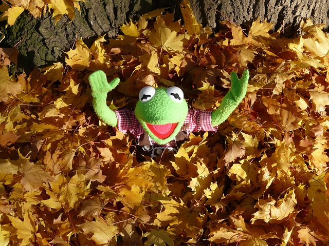 Happy Fall Wallpapers Free Photo Kermit Green Frog Leaf Piles Free Image