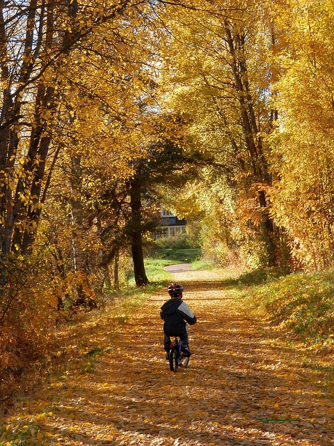 Scenic Fall Wallpaper Boy Bicycle Child 183 Free Photo On Pixabay