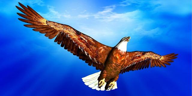 Www Hd Animal Wallpaper Com Kostenlose Illustration Adler Himmel Blau Wolken