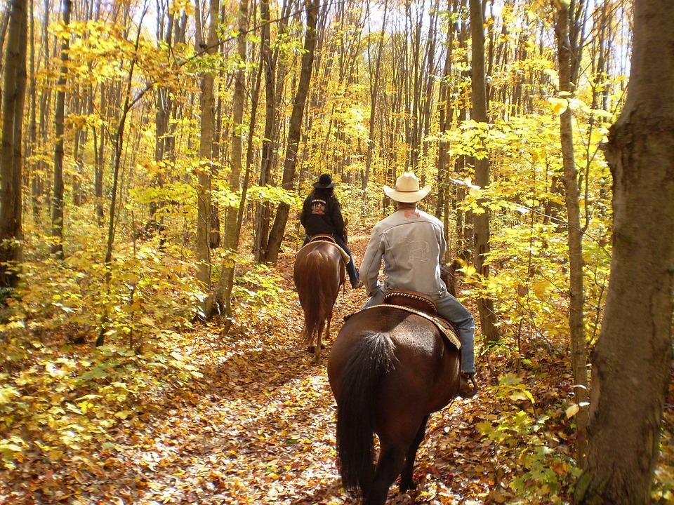 Gatlinburg In The Fall Wallpaper Free Photo Horse Horseback Autumn Fall Free Image On