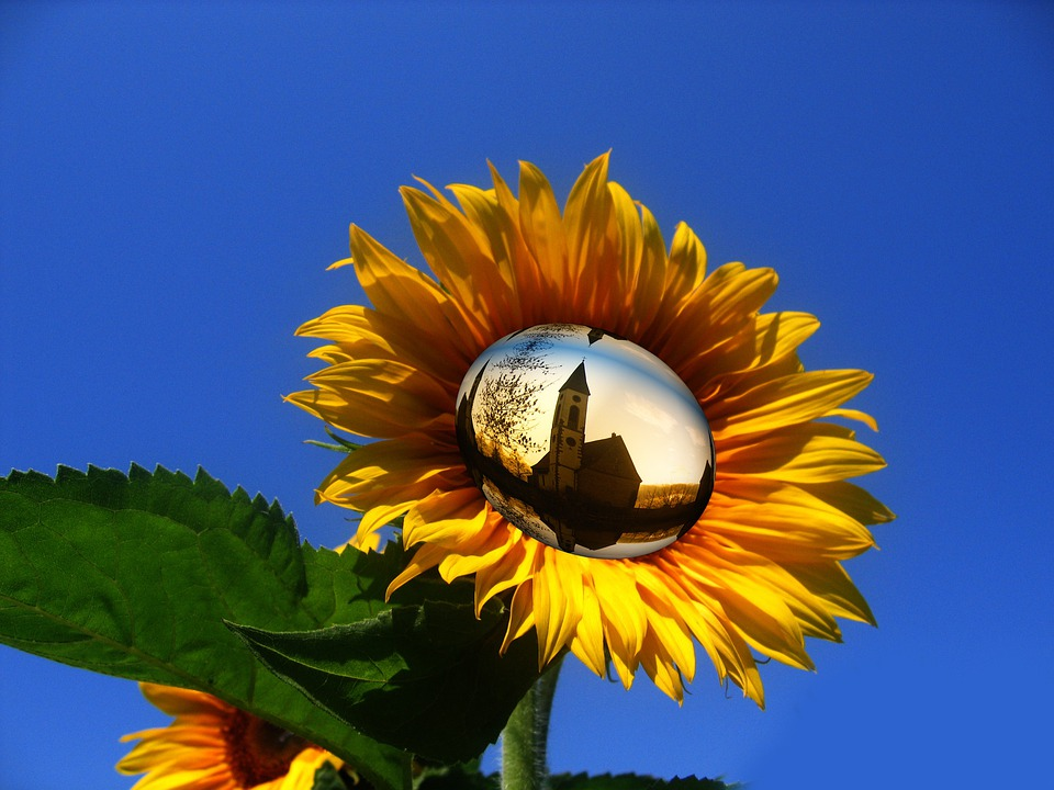 Wallpaper Black Orange Free Photo Sun Flower Yellow Flower Sky Free Image