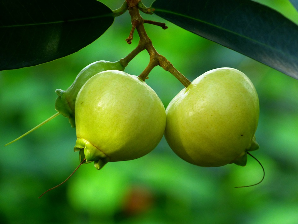 Hd Wallpapers 1080p Nature 3d Photo Gratuite Pomme Rose Fruits Arbre Feuilles