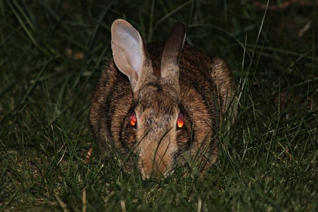 Cute Wallpaper Bunnies Rabbit Bunny Evil 183 Free Photo On Pixabay