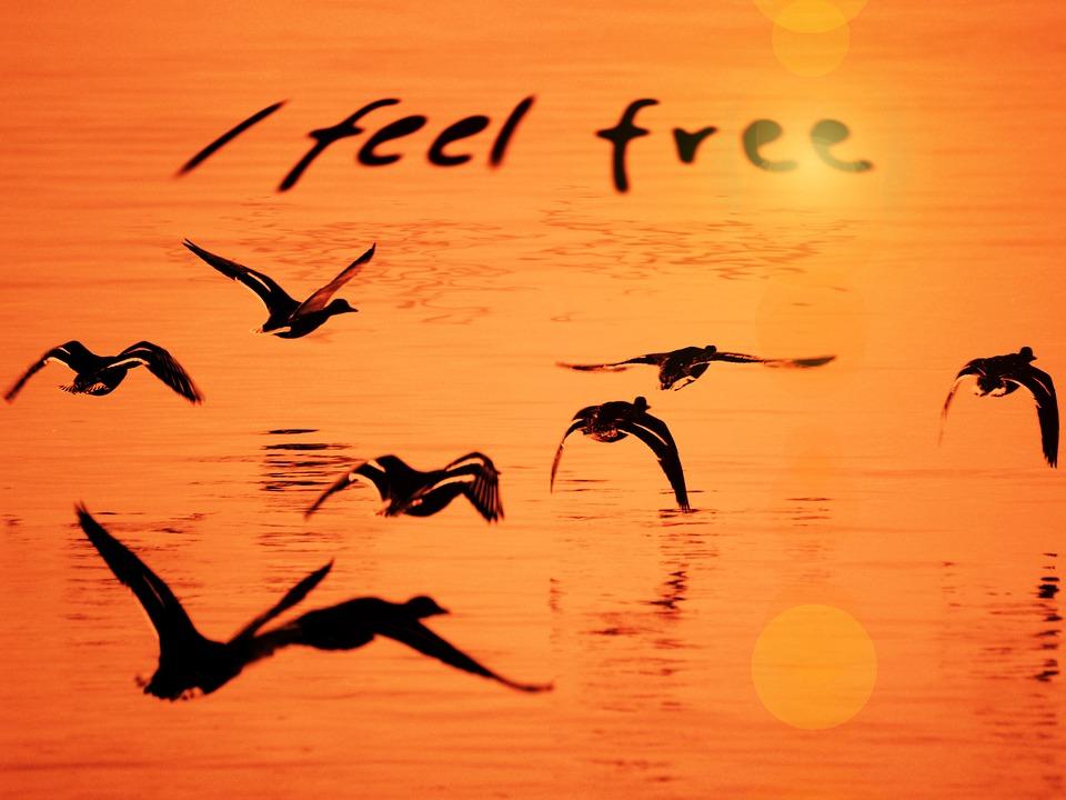 Free Life Quotes Wallpaper Downloads Seagull Water Orange 183 Free Image On Pixabay